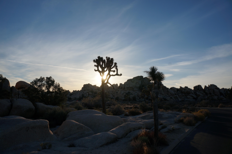 joshua-tree-sunset-flare